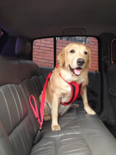 Conheça 3 acessórios para transportar animais de estimação